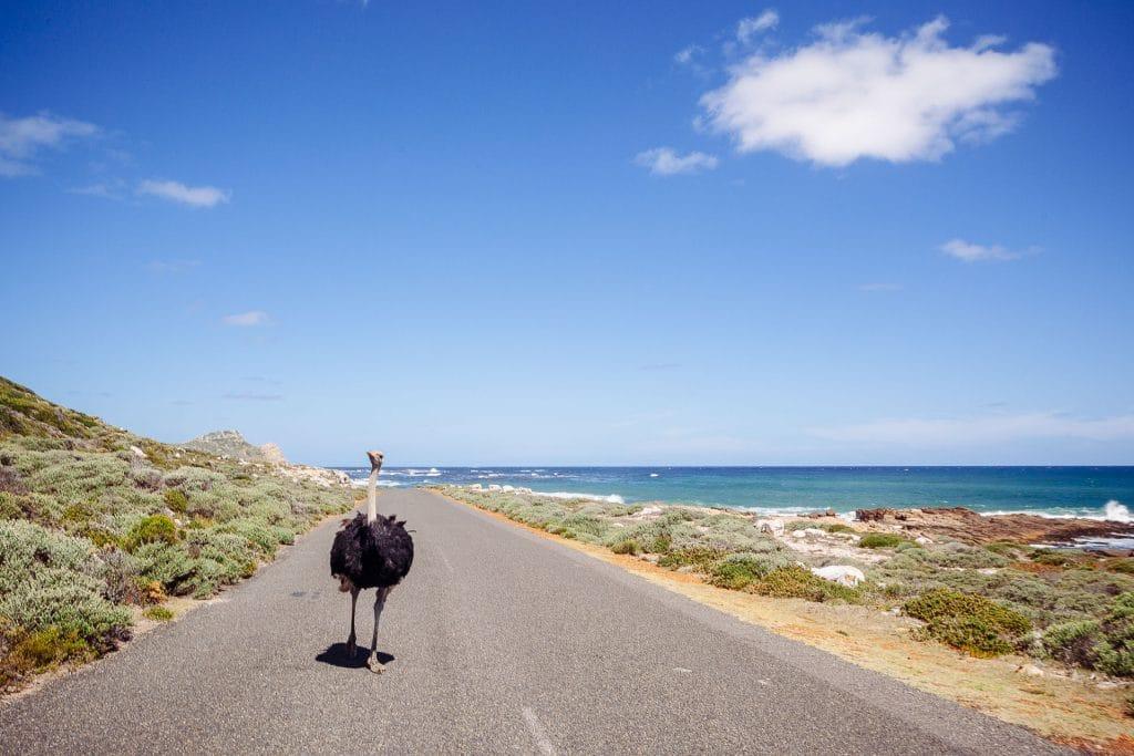 Du Cap de Bonne-Espérance à Franschhoek afrique du sud blog voyage lovelivetravel