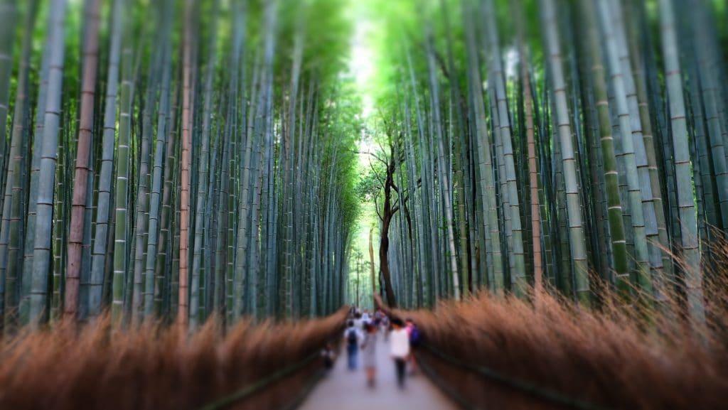 Bamboo grove 1