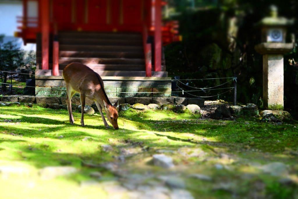 Daims Nara 1