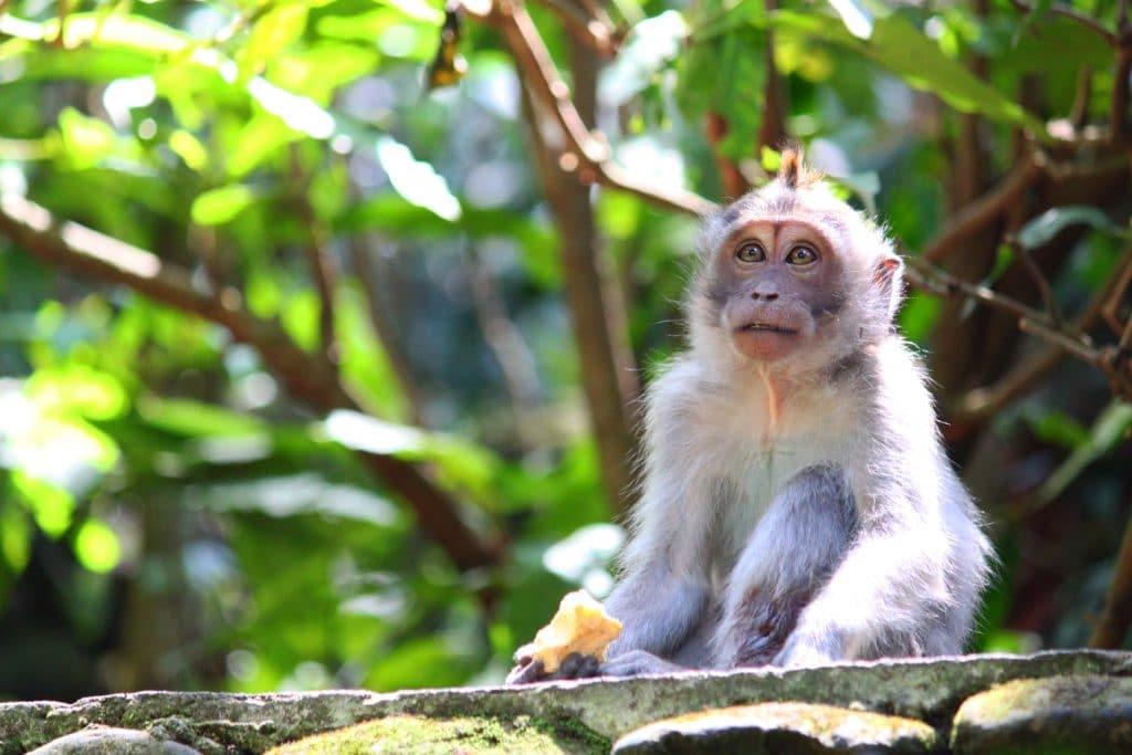 Forêt singes Bali