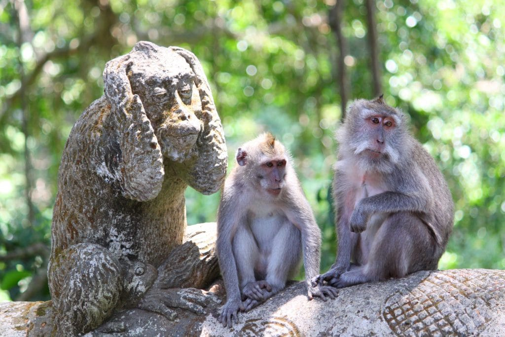 Forêt singes Bali 2