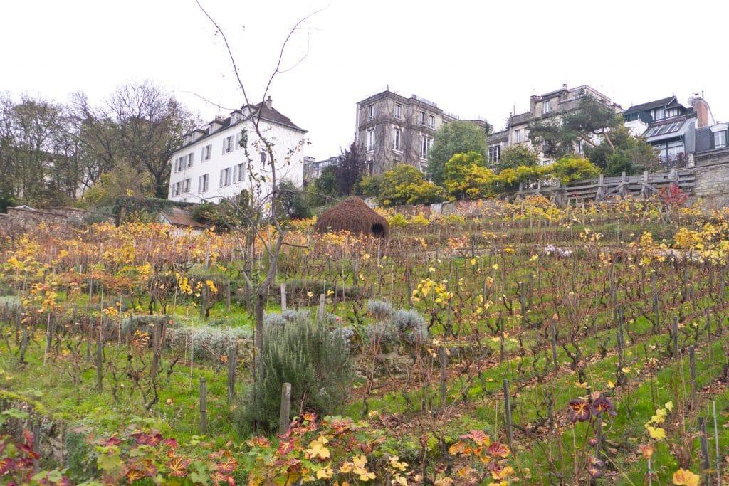 Vignes Clos Montmartre