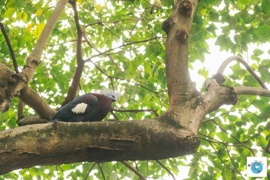 parc park hong-kong volière blog voyage LoveLiveTravel