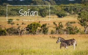 zèbre safari kruger sabi sand cheetah plains blog voyage lovelivetravel