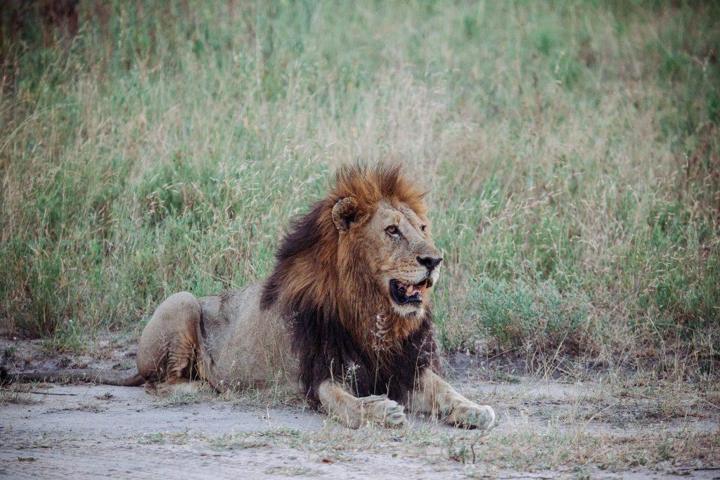 afrique du sud Sabi Sand, un safari plein de z'animaux blog voyage lovelivetravel