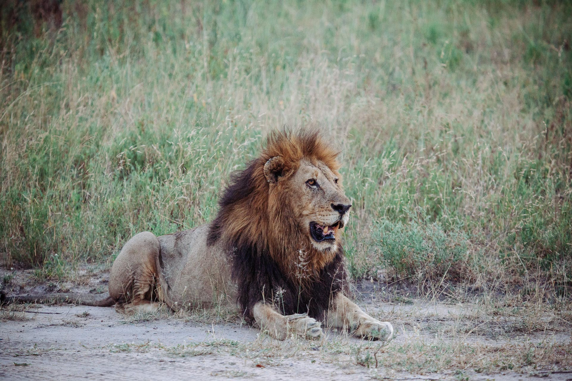 Sabi Sand, un safari plein de z'animaux