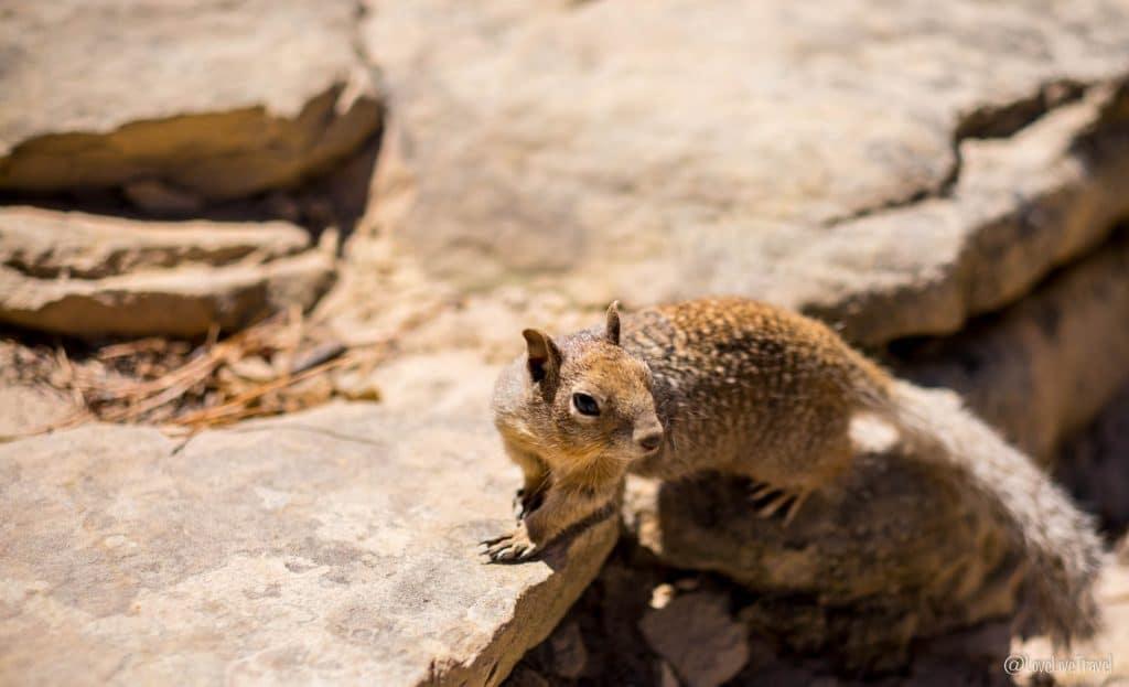 Zion National park Utah roadtrip USA blog voyage lovelivetravel