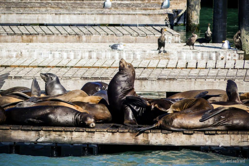fisherman wharf otaries district san francisco road trip usa blog voyage lovelivetravel