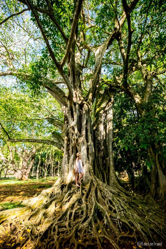 jardin botanique pamplemousse ile maurice blog voyage lovelivetravel