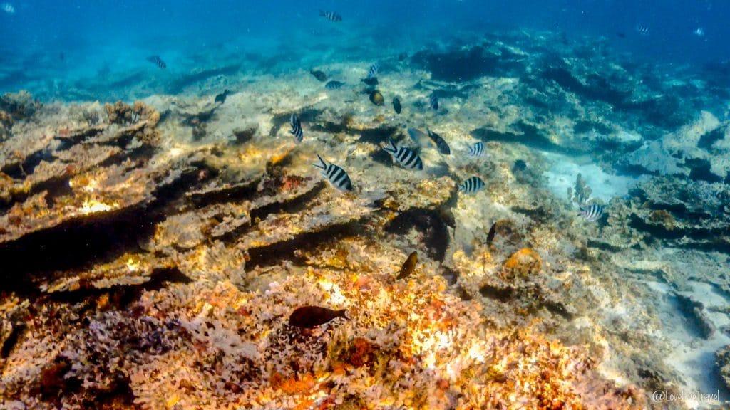 BLUE BAY BEACH ile maurice blog voyage lovelivetravel