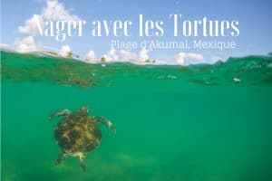 tortue plage d'Akumal tulum mexique blog voyage lovelivetravel