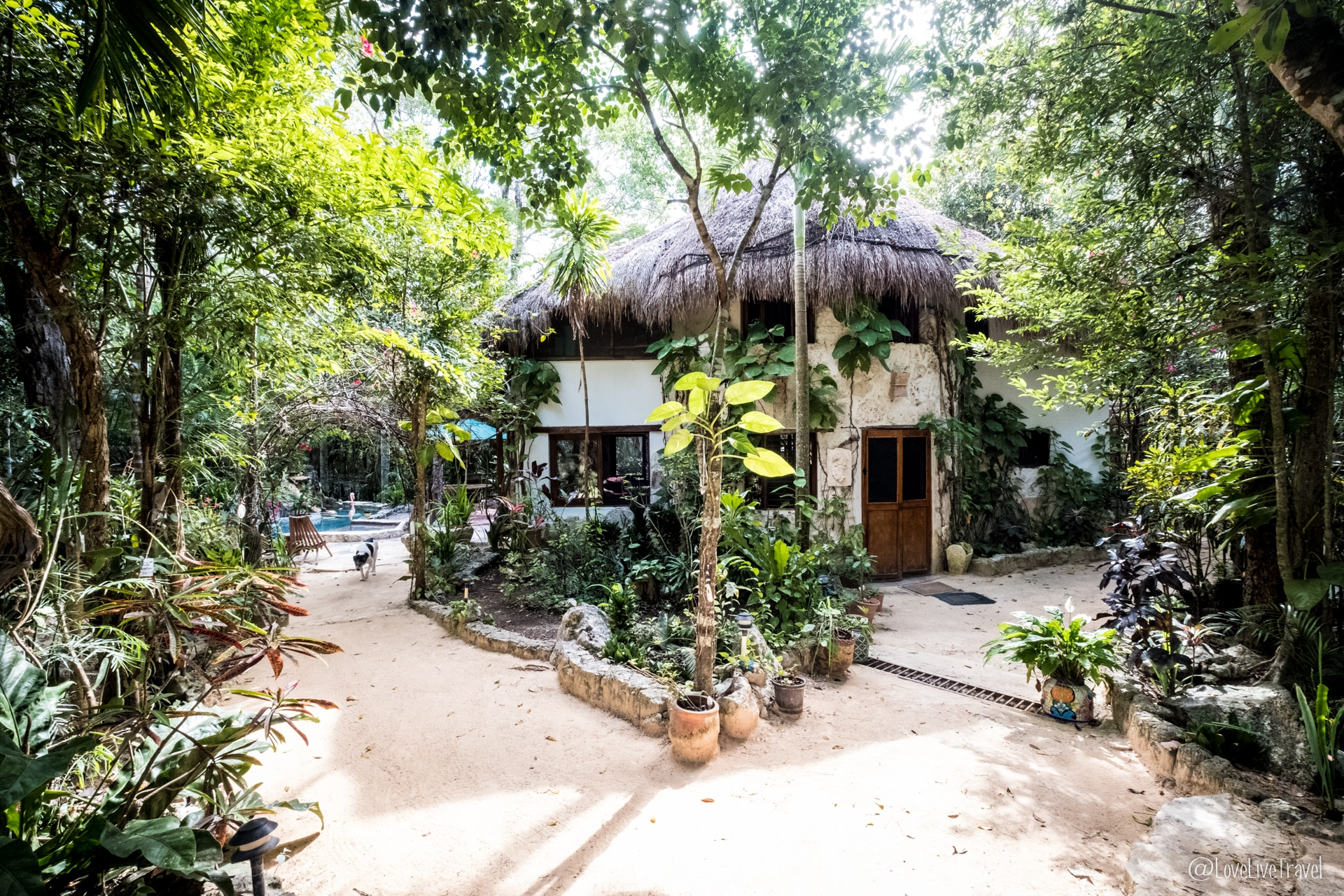 la selva mariposa une chambre d hà te au cŠur de la jungle de tulum