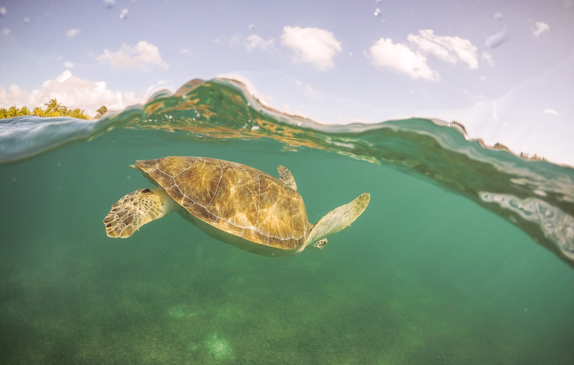Nager avec les tortues de la Plage d'Akumal