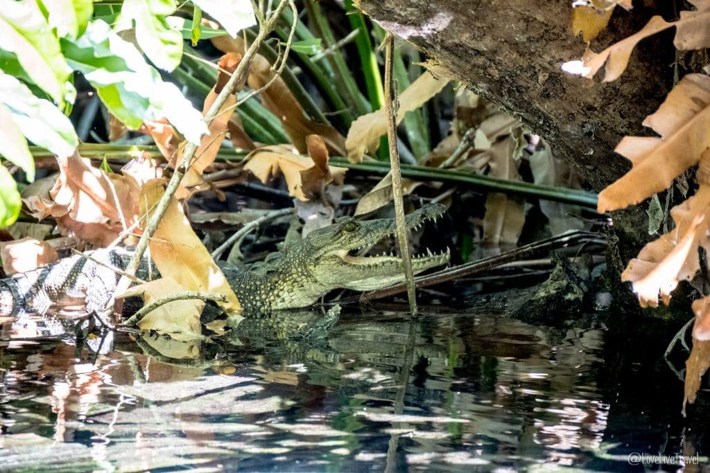 célestun mérida yucatan mexique blog voyage lovelivetravel