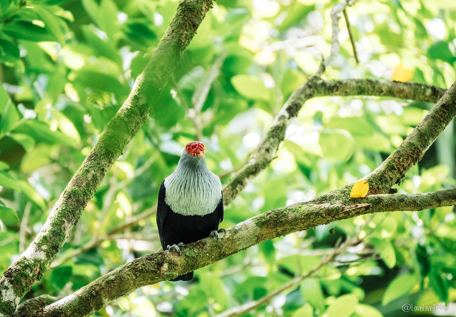 vallée de mai praslin seychelles blog voyage lovelivetravel