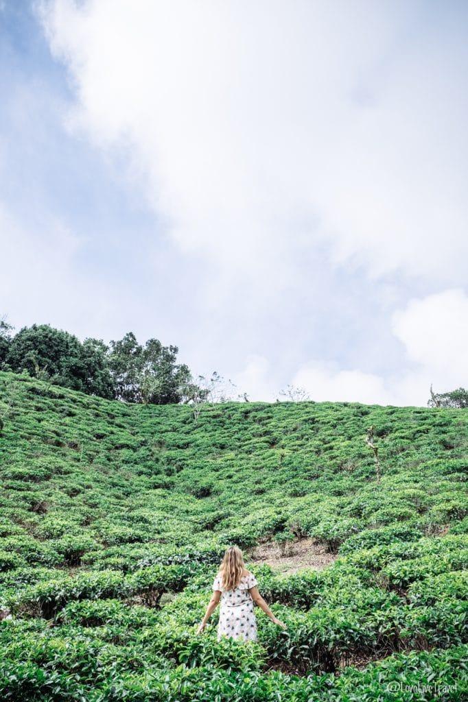 thé mahé seychelles blog voyage lovelivetravel