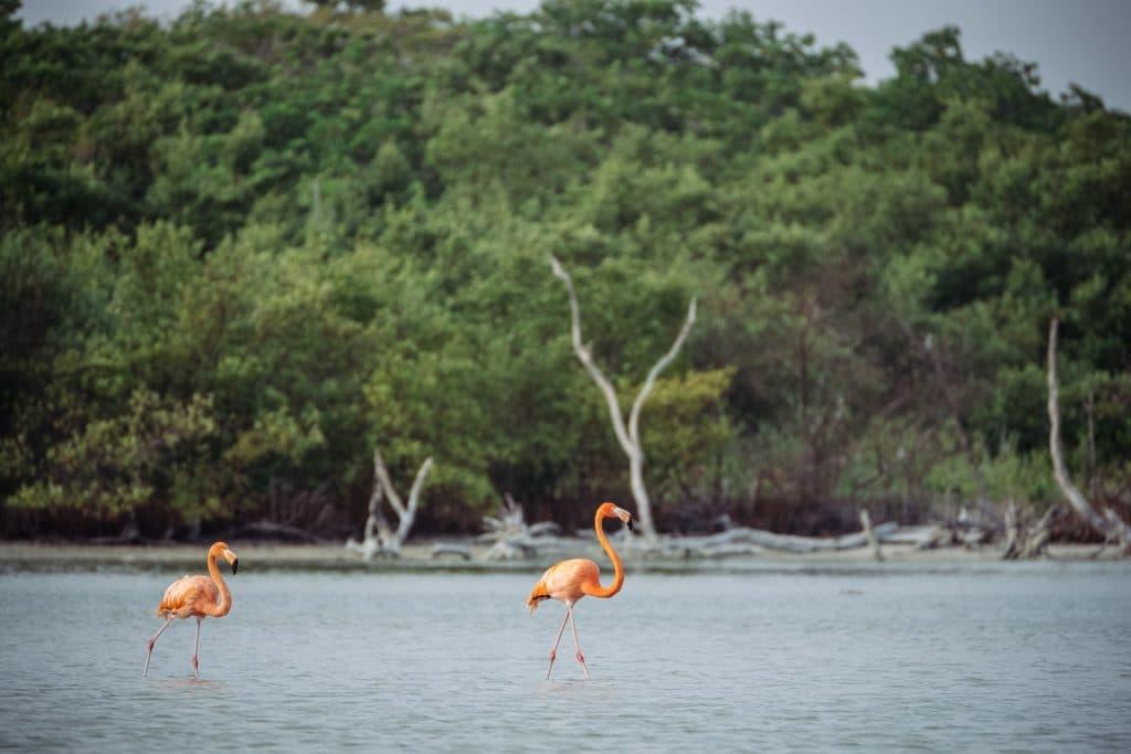 De Izamal à Rio Lagartos, en passant par Chichen Itza blog voyage lovelivetravel