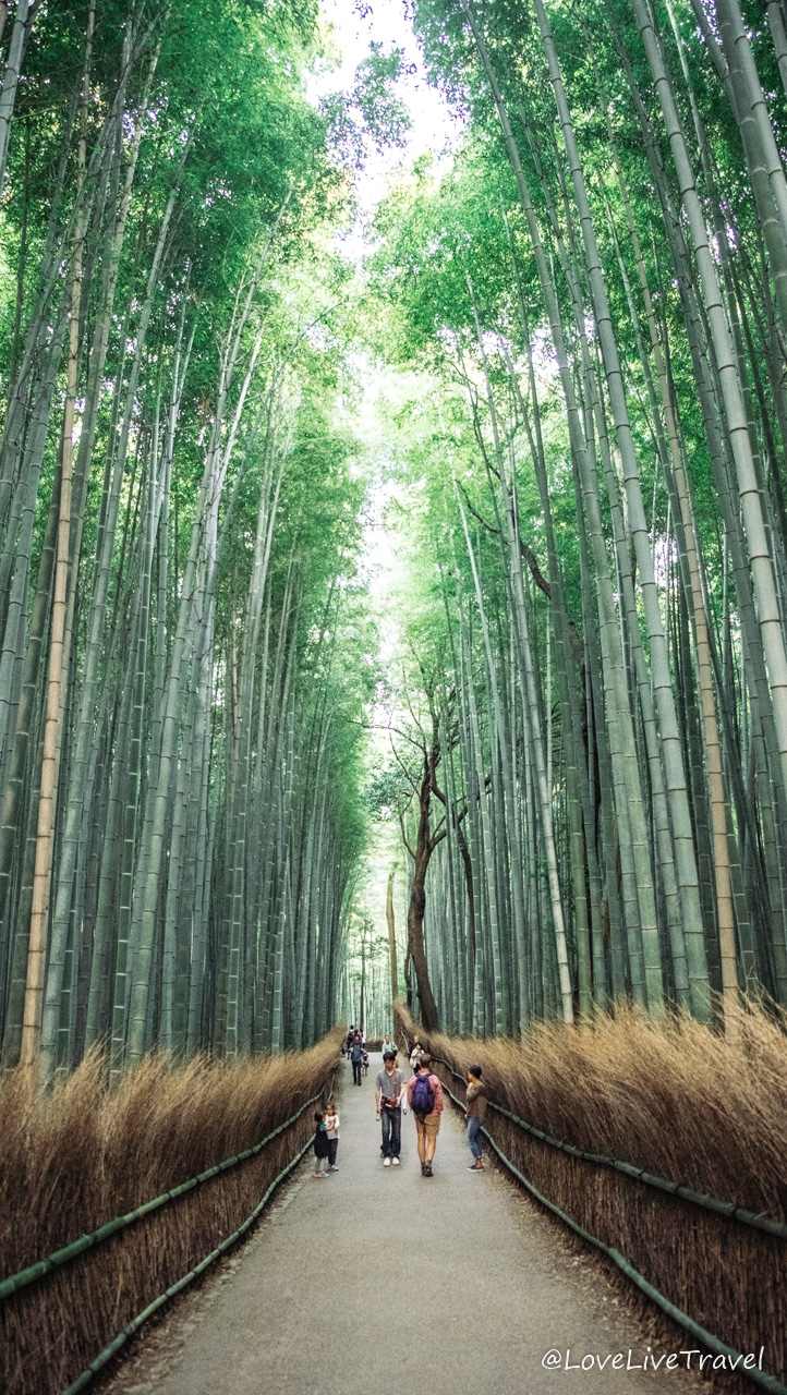 Forêt de bambou Kyoto Japon blog voyage Lovelivetravel