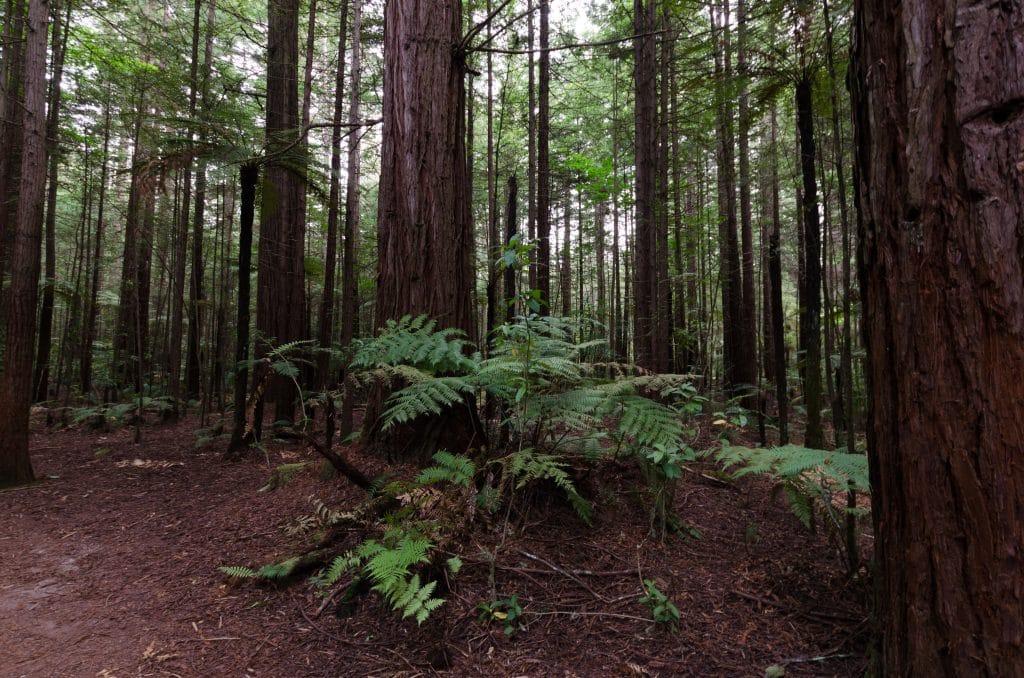 nouvelle Zélande blog voyage lovelivetravel Rotorua