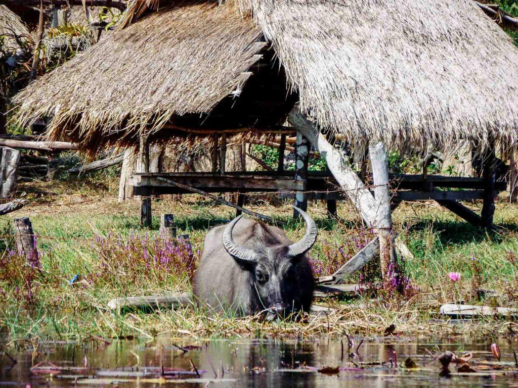 La boucle de Savannakhet au Laos blog voyage lifestyle lovelivetravel