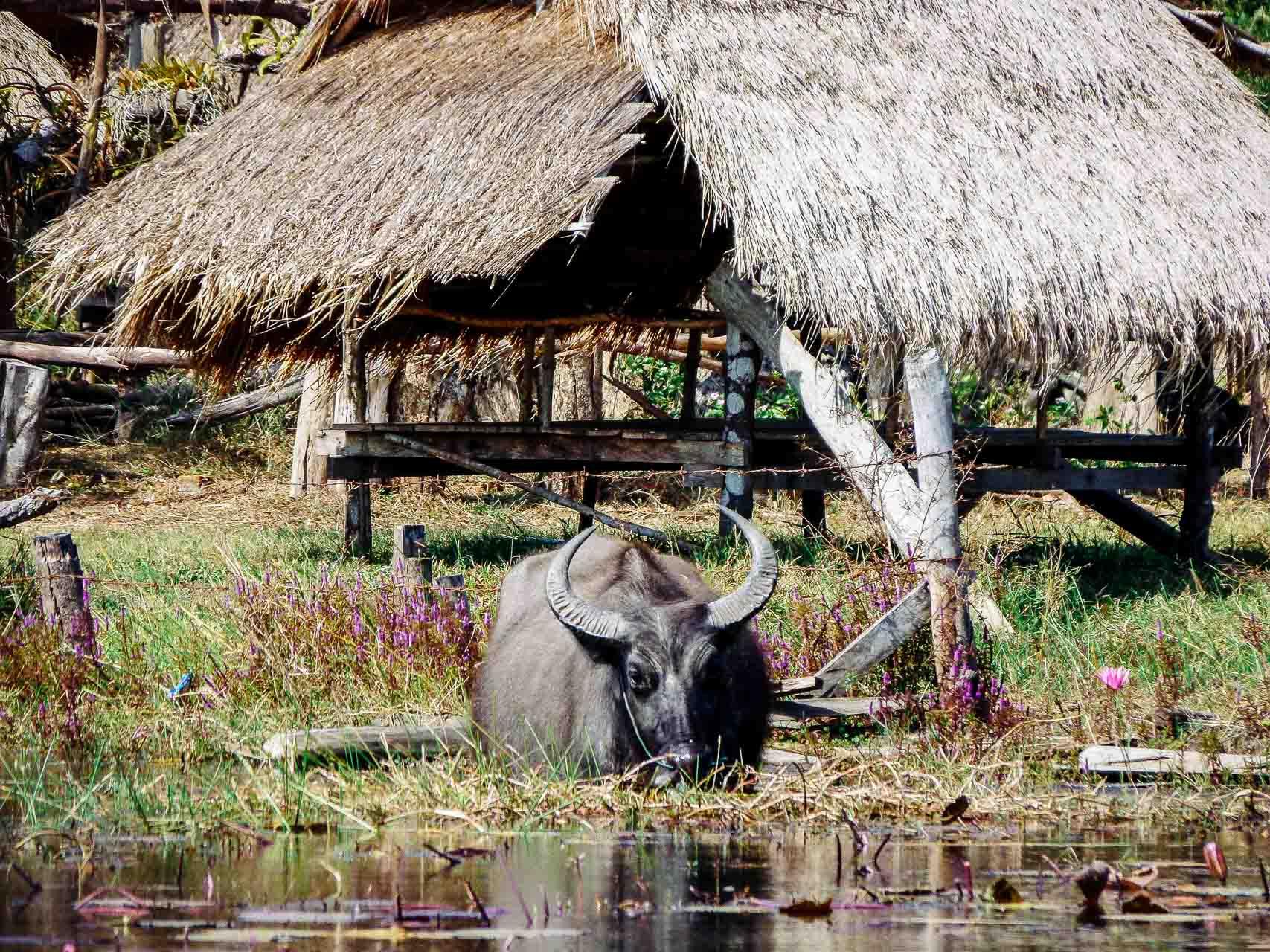 La boucle de Savannakhet au Laos