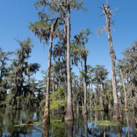 Road trip USA : itinéraire de 12 jours en Louisiane