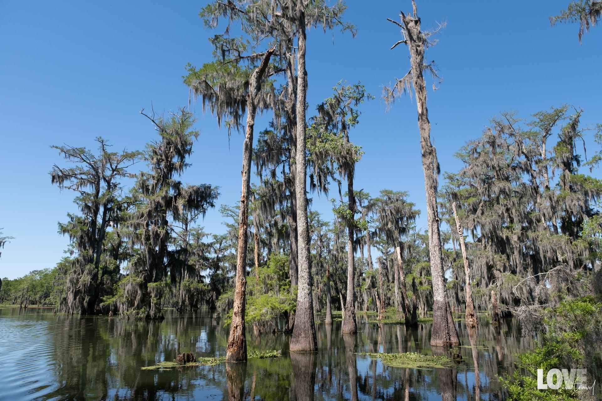 Road trip USA : itinéraire de 12 jours en Louisiane blog voyage et lifestyle lovelivetravel
